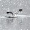 MET 121619 Bird Water