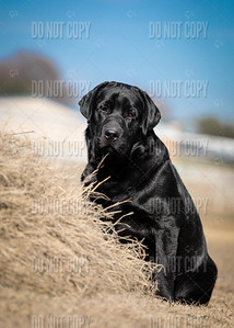 WOODY-9months-003