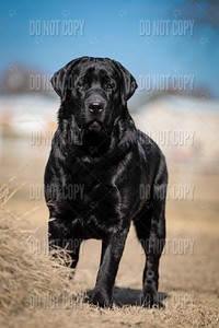 WOODY-9months-007