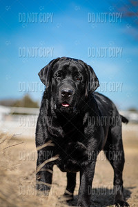 WOODY-9months-016