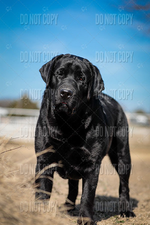 WOODY-9months-015