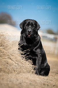 WOODY-9months-004