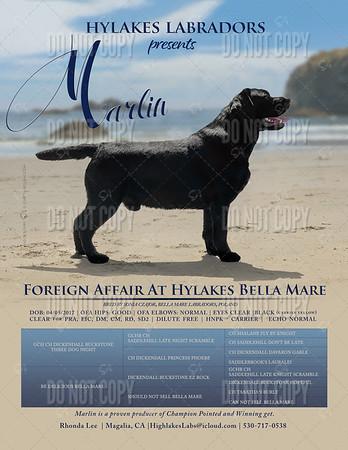 HyLakes Labradors