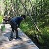 SEARCHING FOR FROGS ON THE FLOATING BRIDGE TO NOWHERE
