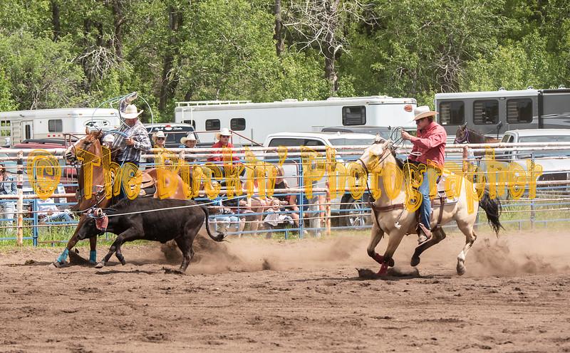 Elk2019_7259
