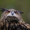 OwlEvent-18