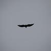 OwlEvent-4