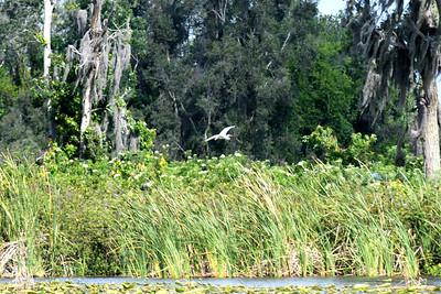 CSN_8179_grassy lake
