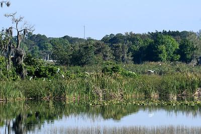 CSN_8014_grassy lake