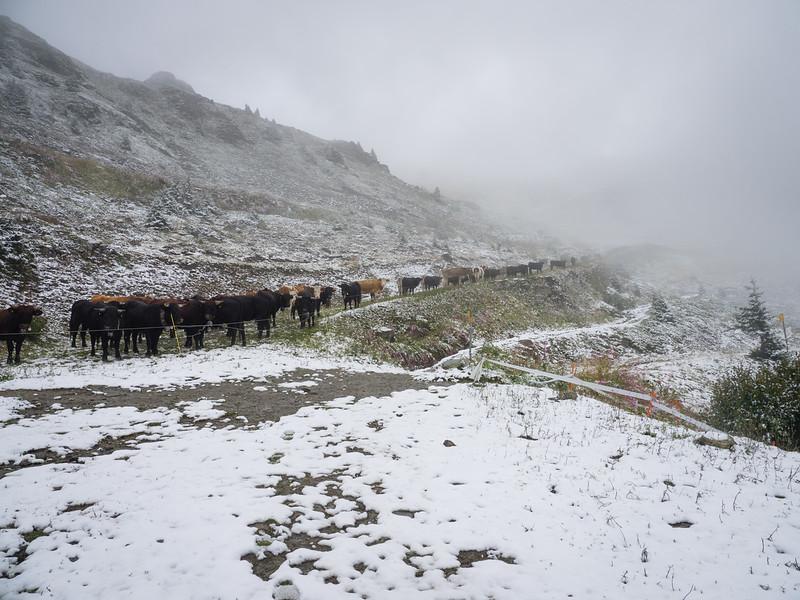 9/8 - Traffic on a snowy path
