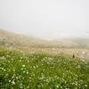 9/8 - Late wildflowers