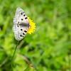 9/11 - Butterfly