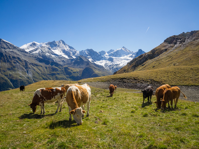 9/13 - Sorebois pasture