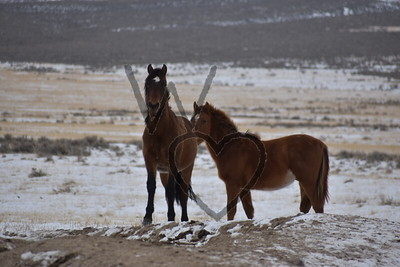 January-Horses and Cattle