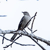 Birds121019-3
