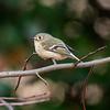 Birds121019-16