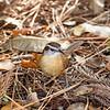 Birds121019-20