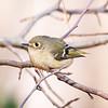 Birds121019-18