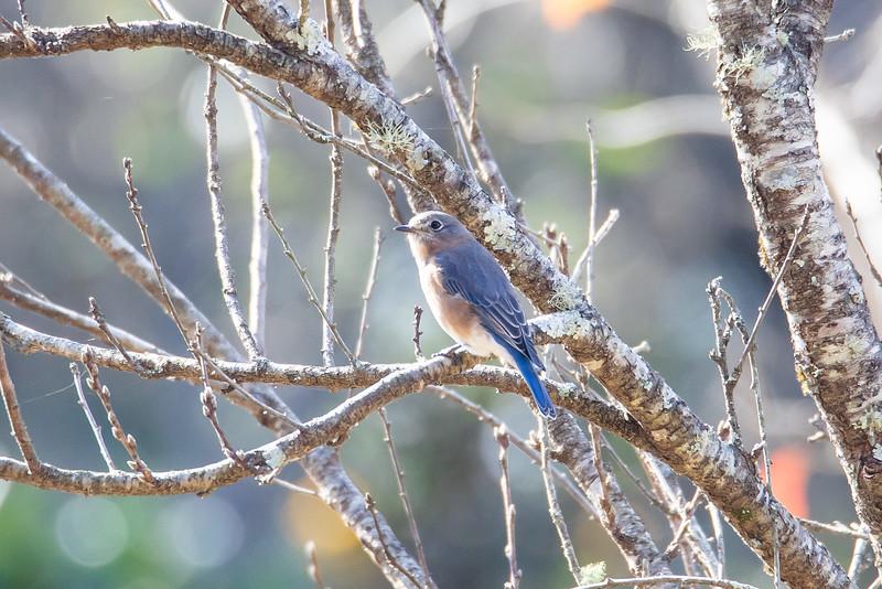 Birds121019-1