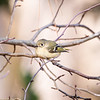 Birds121019-19