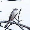 Birds121019-4
