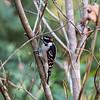 Birds121019-8