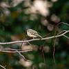Birds121019-15
