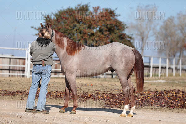 HORSE-001
