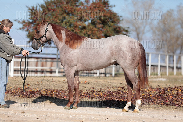 HORSE-011
