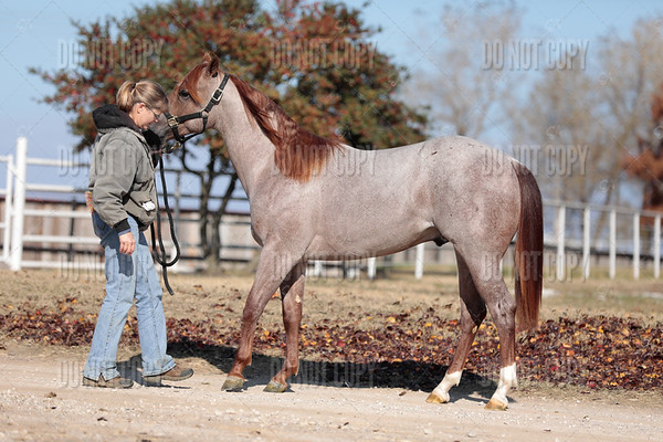 HORSE-013