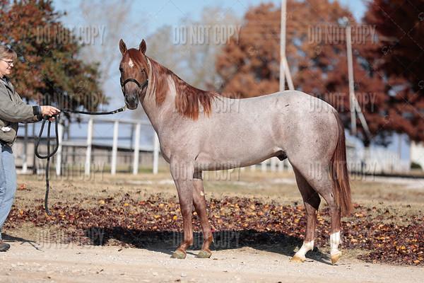 HORSE-020