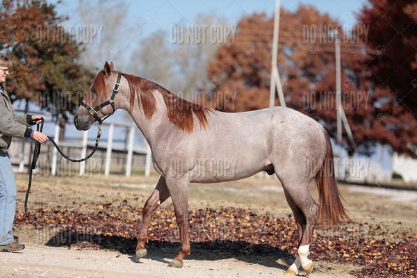 HORSE-018
