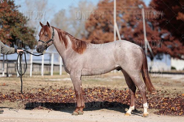 HORSE-016