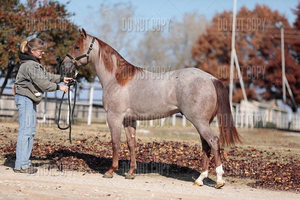HORSE-014