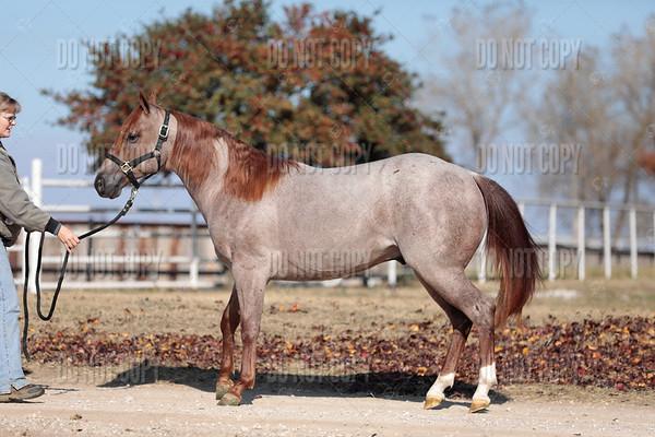 HORSE-009