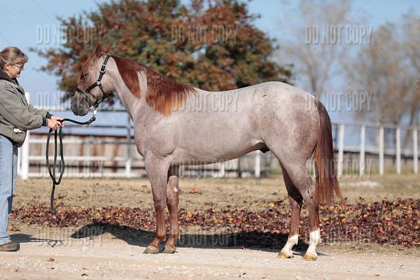 HORSE-010