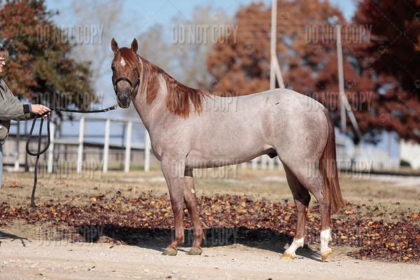 HORSE-021