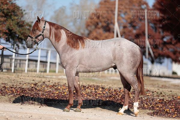 HORSE-024