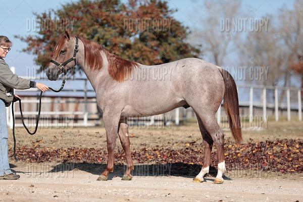 HORSE-007