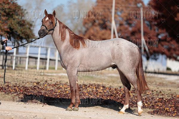 HORSE-017