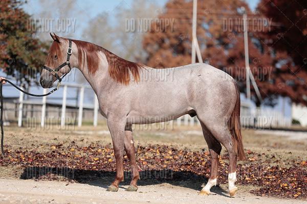 HORSE-023