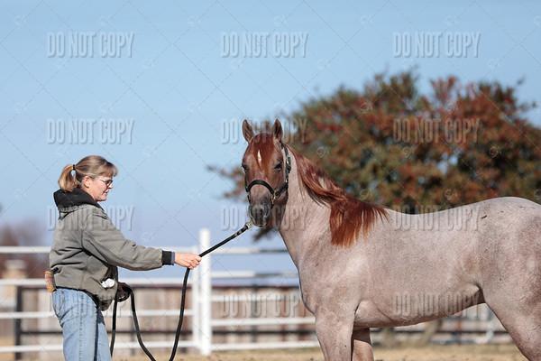 HORSE-004