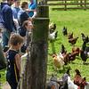MET 051919 Chickens