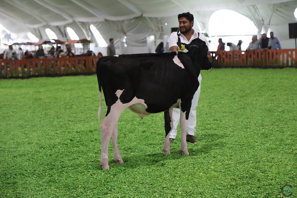 Mexico16_Holstein_1M9A4344