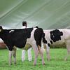 Mexico16_Holstein_1M9A4348