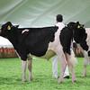 Mexico16_Holstein_1M9A4347