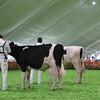 Mexico16_Holstein_1M9A4350