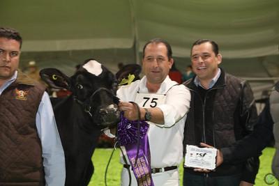 Mexico Holstein Heifers 2016