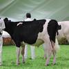 Mexico16_Holstein_1M9A4351