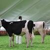 Mexico16_Holstein_1M9A4349